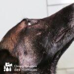 Profil chien âgé